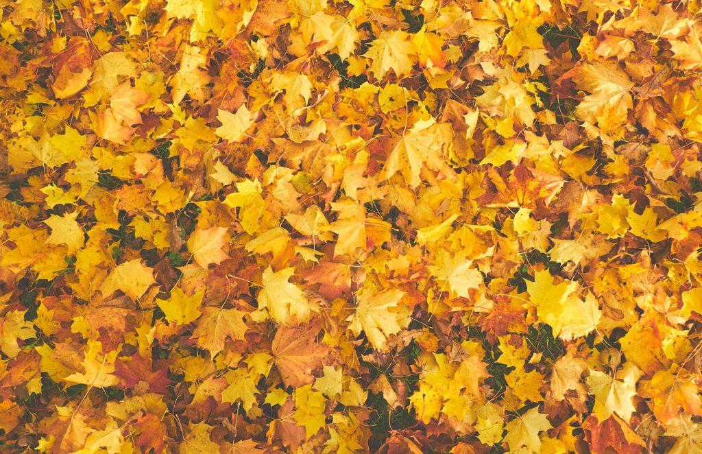 autumn prescience release october
